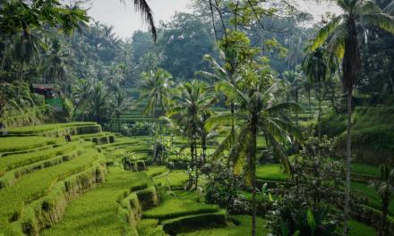 Bali valuta, kostnader & sek till bali